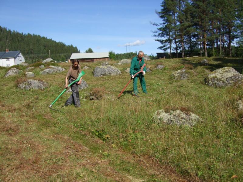 Slåtter i Nässjö, Ramsele. Foto: Maria Danvind
